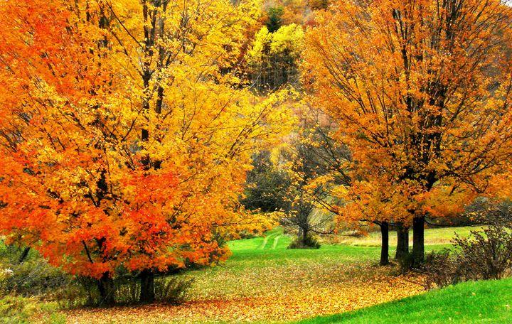 Grassy Autumn Road - Rodney Williams