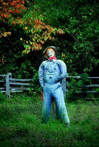 Hello Dorothy