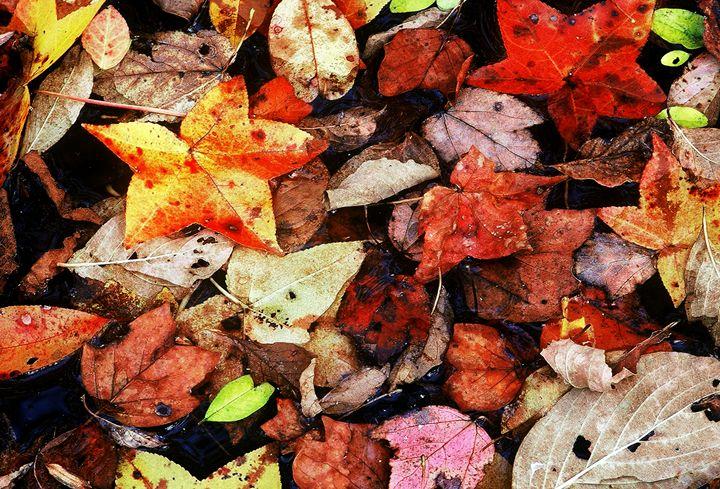 Leaf Patterns 1 - Rodney Williams