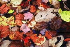 Leaf Patterns 2