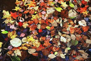Leaf Patterns 3