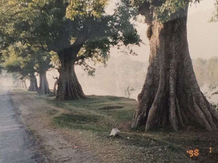 Old trees - Paintings by Hajira