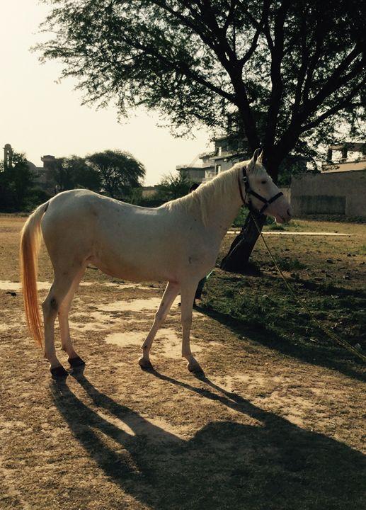 White horse - Paintings by Hajira