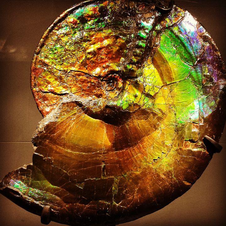 Ammonite Shell - LubetskyArt