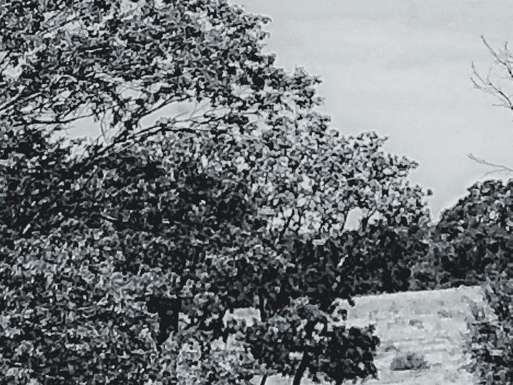 Farm Tree Oklahoma - Tammera Carter Art Gallery
