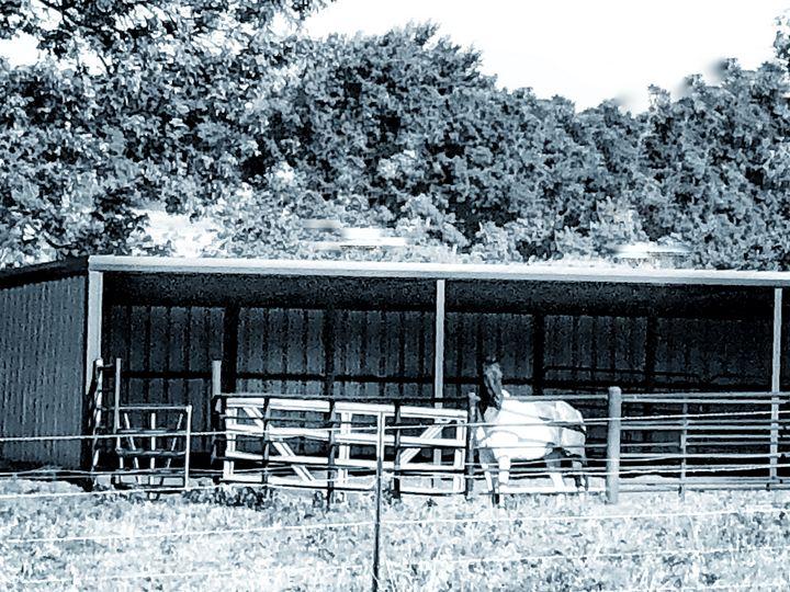Oklahoma Horse in a barn - Tammera Carter Art Gallery