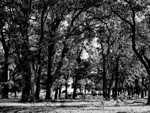 Oklahoma Forest