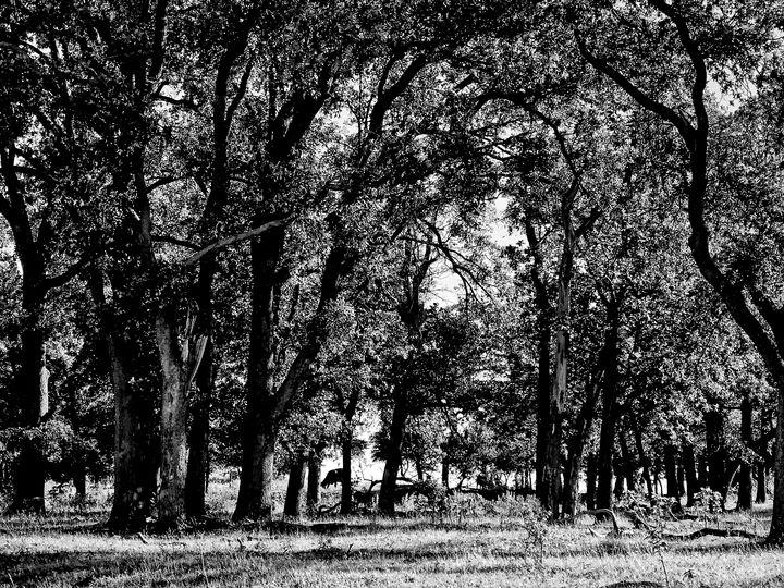 Oklahoma Forest - Tammera Carter Art Gallery