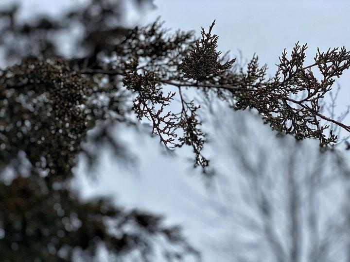 Tree Branch - Tammera Carter Art Gallery
