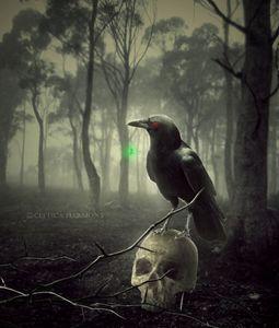 The Holy Crow - Celtica Harmony