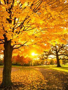 Auston Park  Montgomery Il - Sunset Awe