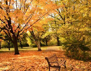 Fall Colors 14x11 - Sunset Awe