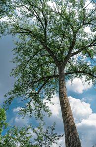 Tall Oak.. North Aurora il