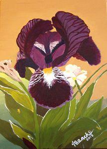 Violet Texas Iris