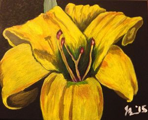 Yellow Lily (c) Jessica Bench 2015
