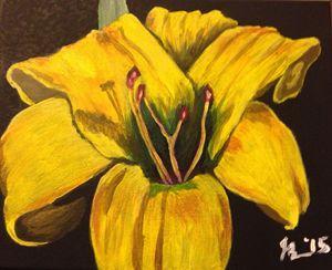 Yellow Lily (c) Jessica Bench 2015