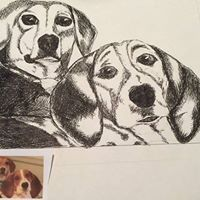 Animal and Pet Drawings - Bella's Pictures and Baubles - Photo into Art