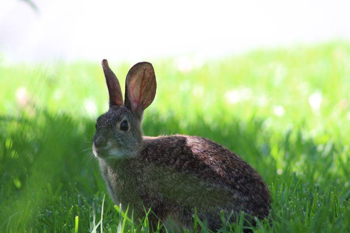 The Easter Bunny - Allen