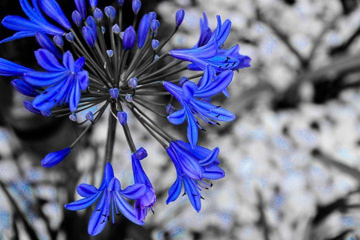 black and blue - decoart