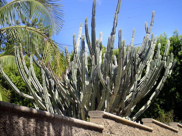 Big cactus plant. Sunny day - Sofia Goldberg's Gallery