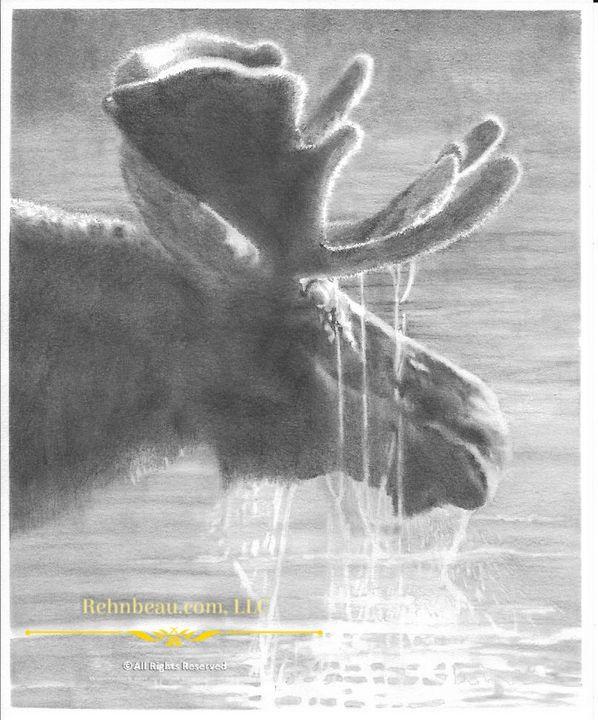 First Moose - Rehnbeau