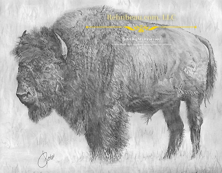 First Bison - Rehnbeau