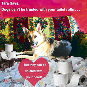 Toilet Roll Mistrust!