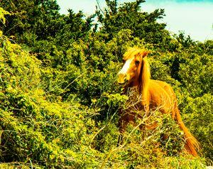 Horsey Peek a Boo!