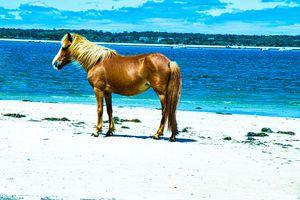 Horsey Beach Beauty