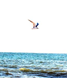 Fly Seagull Fly - Klacey's Photography