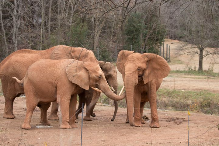 Elephants Family Gathering - Klacey's Photography