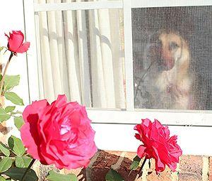 Tara and the Memorial Roses