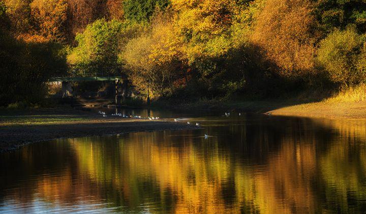 Gartmorn Dam Country Park - Jeremy Lavender Photography