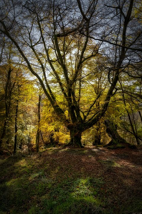 Autumn colours in the forest - Jeremy Lavender Photography