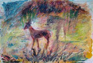 Deer, Sonora
