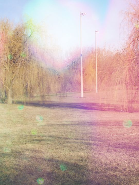 Willows and Light - Opalescent Raven