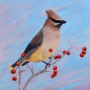 Cedar Waxwing in a Tree