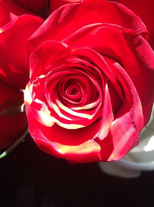 Red, red rose - Brogan Fine Art