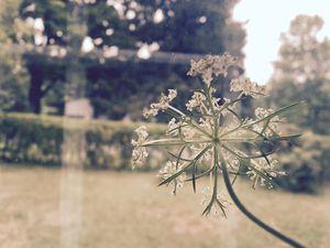 Flower in the Window - Brogan Fine Art