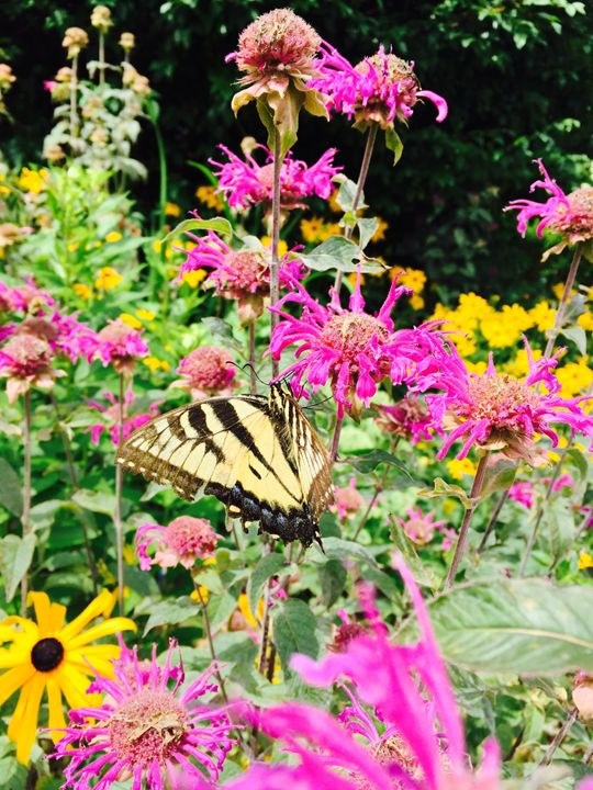Butterfly in flower garden - Brogan Fine Art