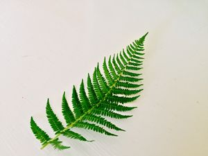 Fern - The Shape of Nature