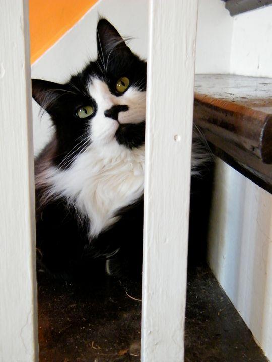 Cute Cat - Brogan Fine Art