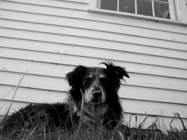 Country Dog - Brogan Fine Art