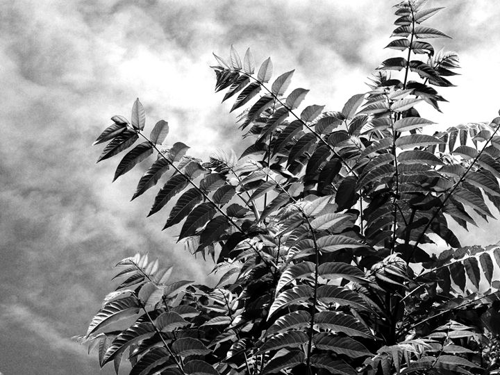 Tropical Leaves in Black and White - Brogan Fine Art