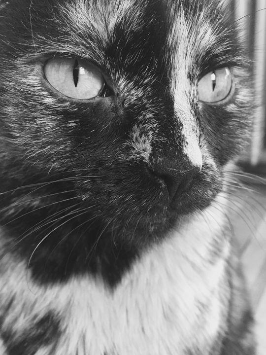 Black and white cat face - Brogan Fine Art