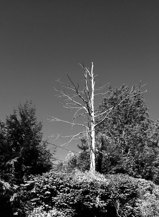 Black and white tree - Brogan Fine Art