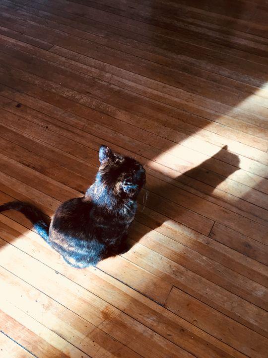Cat's Shadow - Brogan Fine Art