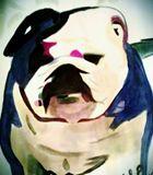 18x24 Bulldog watercolor print