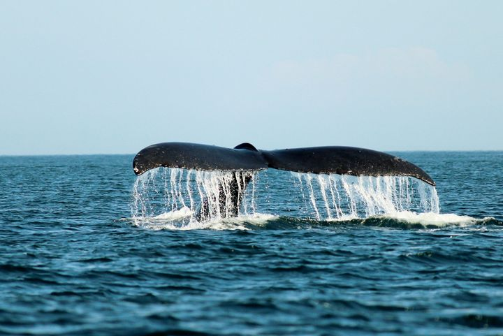 A Tail of a Whale - Ravens Real Life Gallery