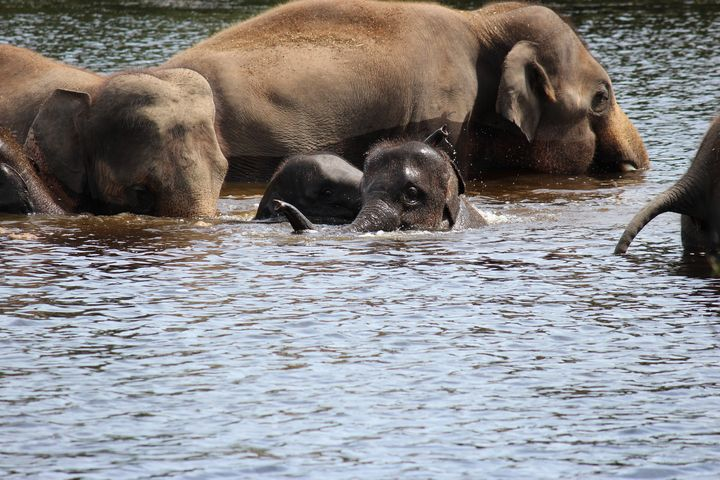 Elephants playing in water - Ravens Real Life Gallery
